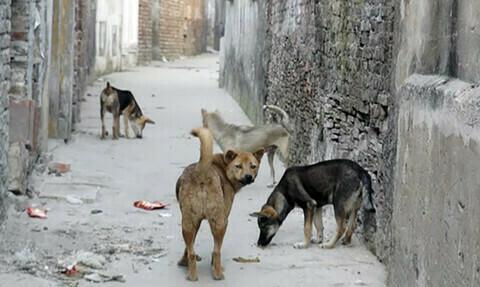 Xử phạt chó phóng uế theo quy định của pháp luật