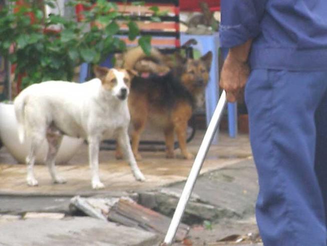 Xử phạt chó phóng uế